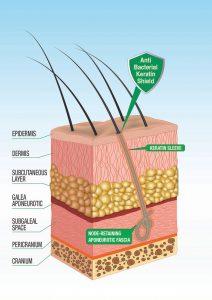 capello singolo - keratin shield